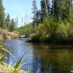 Vito Pavlin - Gibbon river